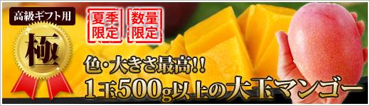 【極】大玉の高級ギフト用マンゴー